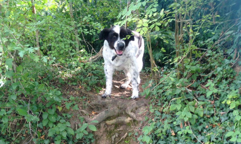 Eddie's superstitious blog – Week 3