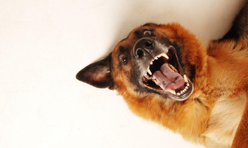 When dogs bite: why it's not always straightforward