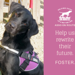 Fostering Appeal